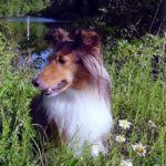 Doggies1.jpg