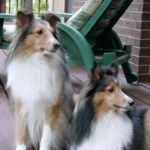 Doggies3.jpg