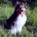 Doggies5.jpg